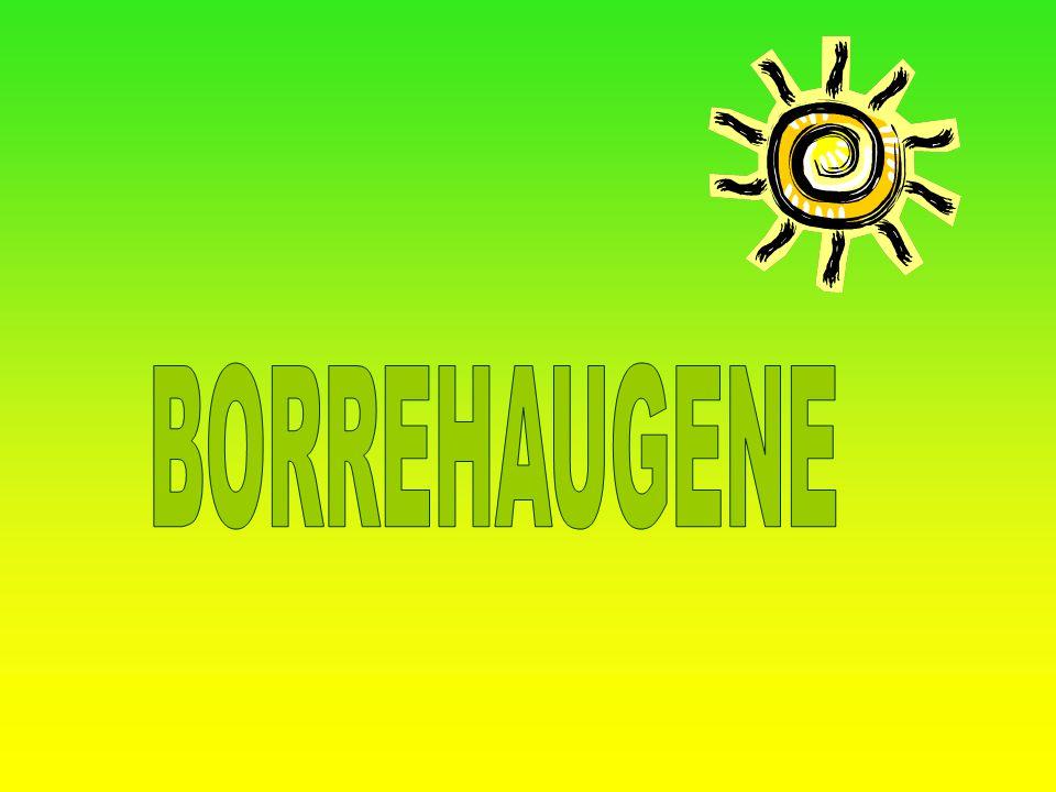 BORREHAUGENE