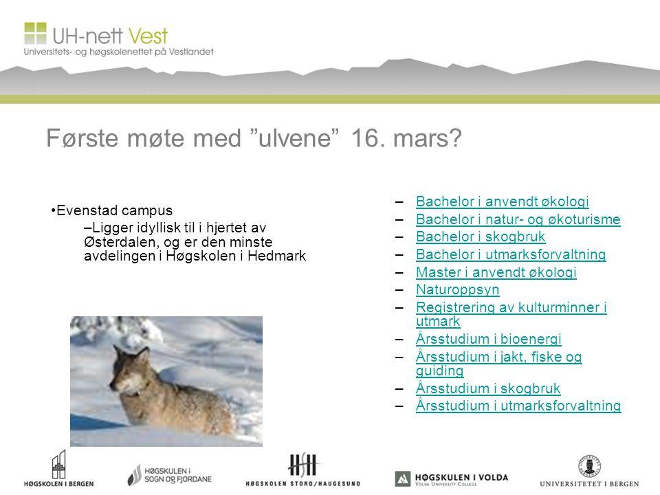 Første møte med ulvene 16. mars