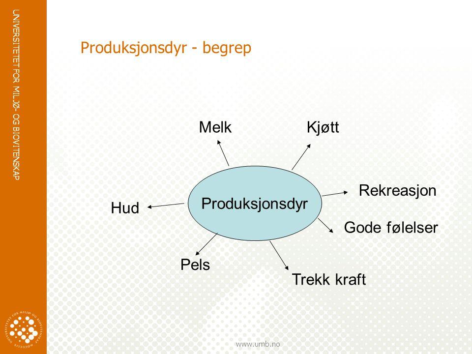 Produksjonsdyr - begrep