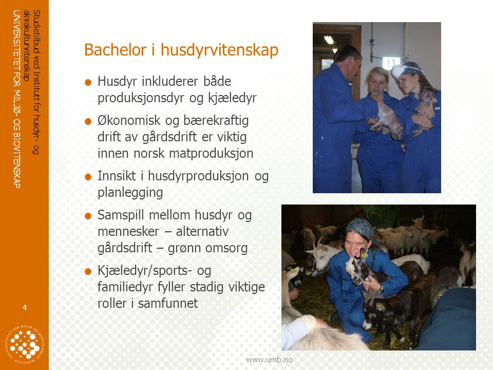 Bachelor i husdyrvitenskap