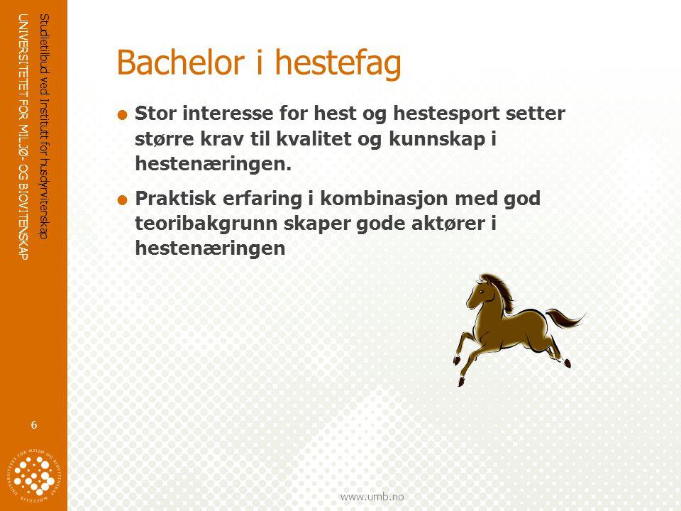 Bachelor i hestefag Stor interesse for hest og hestesport setter større krav til kvalitet og kunnskap i hestenæringen.