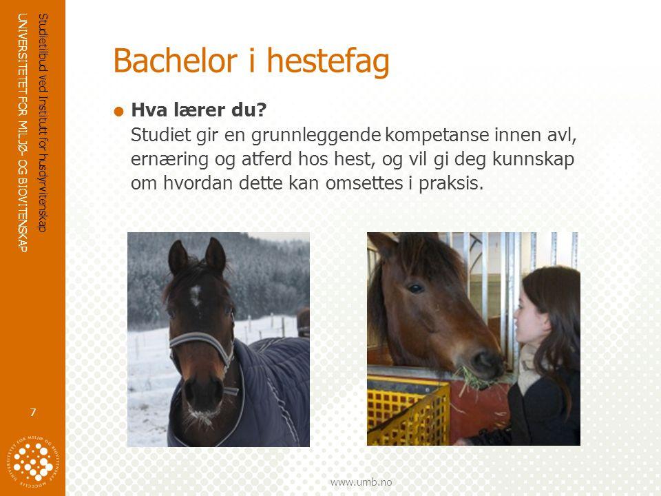 Bachelor i hestefag