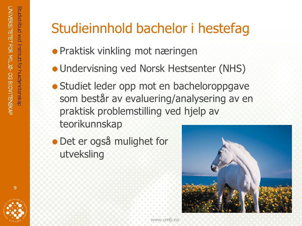 Studieinnhold bachelor i hestefag