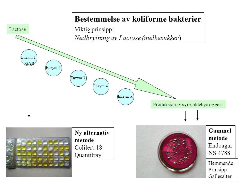 Bestemmelse av koliforme bakterier