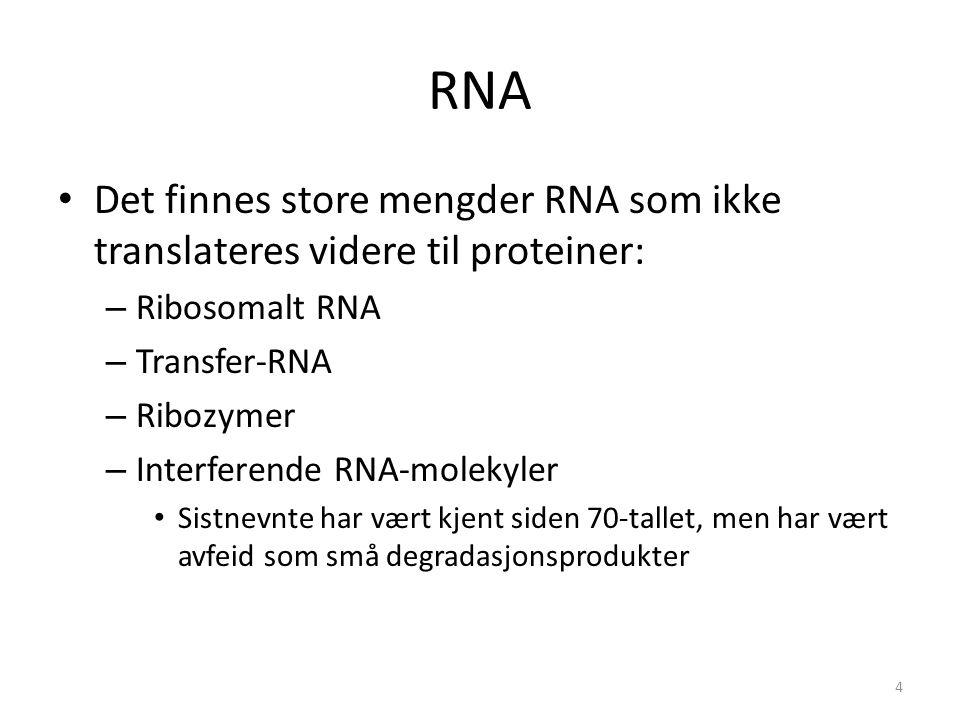 RNA Det finnes store mengder RNA som ikke translateres videre til proteiner: Ribosomalt RNA. Transfer-RNA.