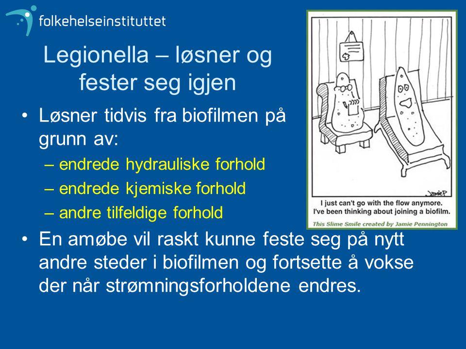 Legionella – løsner og fester seg igjen