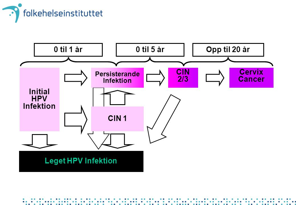 0 til 1 år 0 til 5 år Opp til 20 år Initial HPV Infektion CIN 2/3