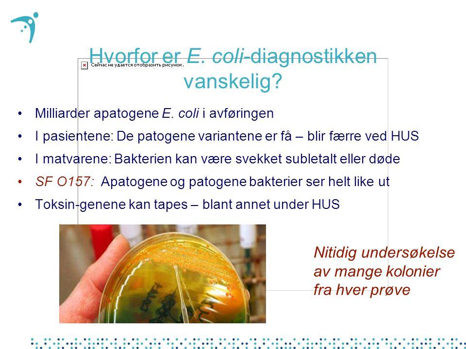 Hvorfor er E. coli-diagnostikken vanskelig