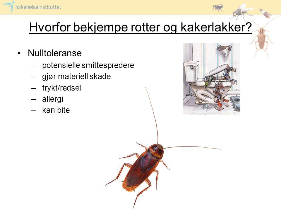 Hvorfor bekjempe rotter og kakerlakker