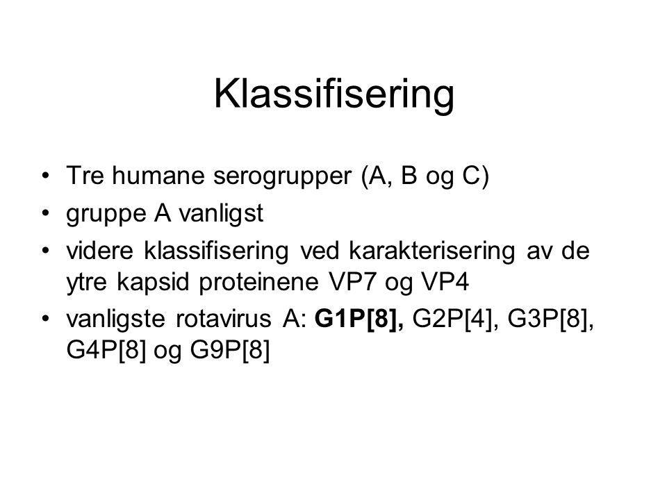 Klassifisering Tre humane serogrupper (A, B og C) gruppe A vanligst