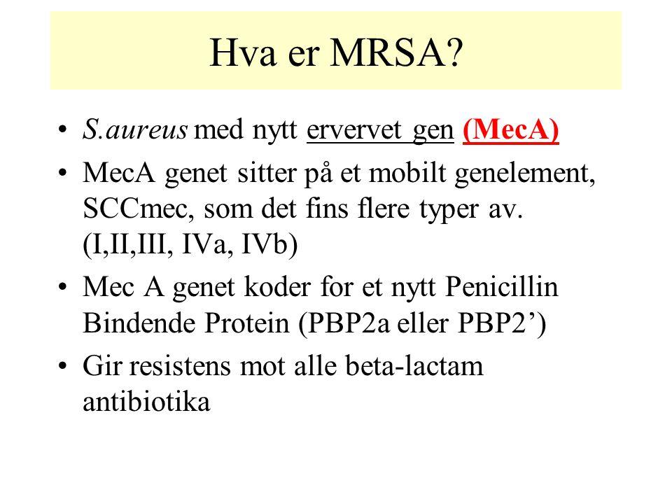Hva er MRSA S.aureus med nytt ervervet gen (MecA)