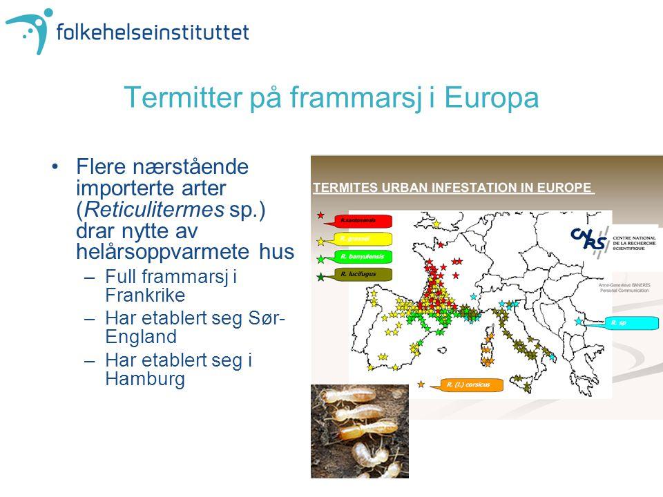 Termitter på frammarsj i Europa