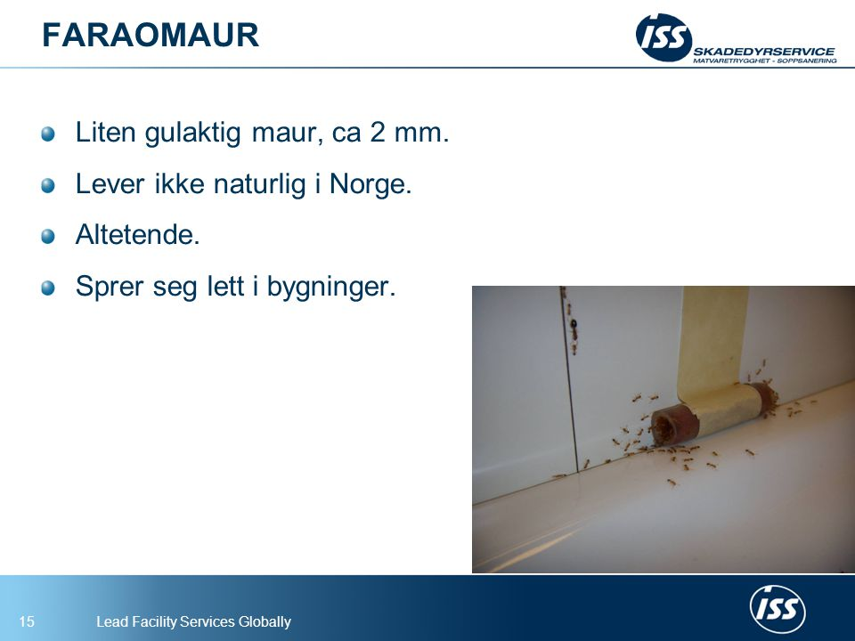 FARAOMAUR Liten gulaktig maur, ca 2 mm. Lever ikke naturlig i Norge.