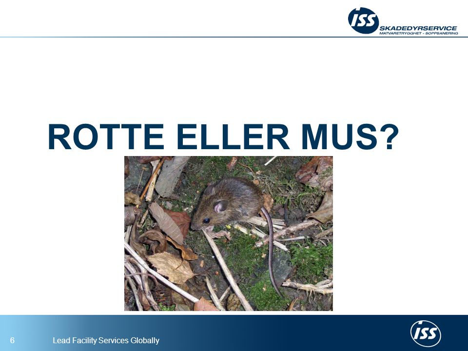 ROTTE ELLER MUS
