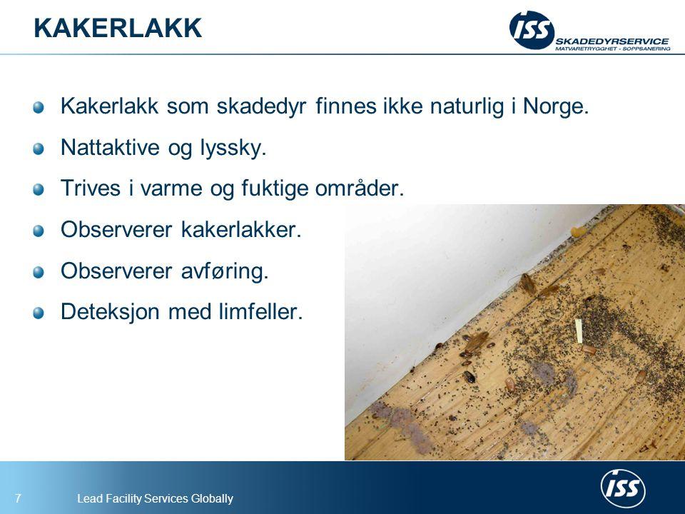 KAKERLAKK Kakerlakk som skadedyr finnes ikke naturlig i Norge.