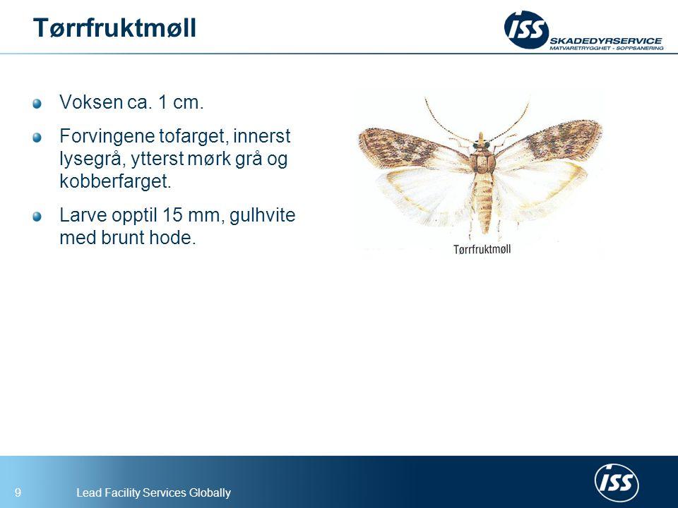 Tørrfruktmøll Voksen ca. 1 cm.