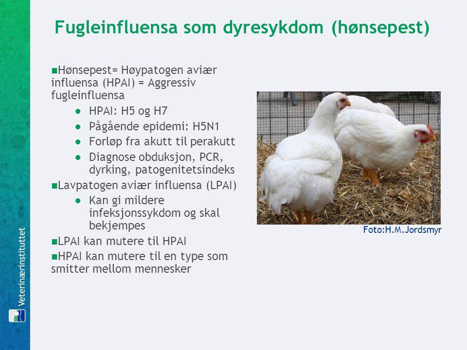 Fugleinfluensa som dyresykdom (hønsepest)