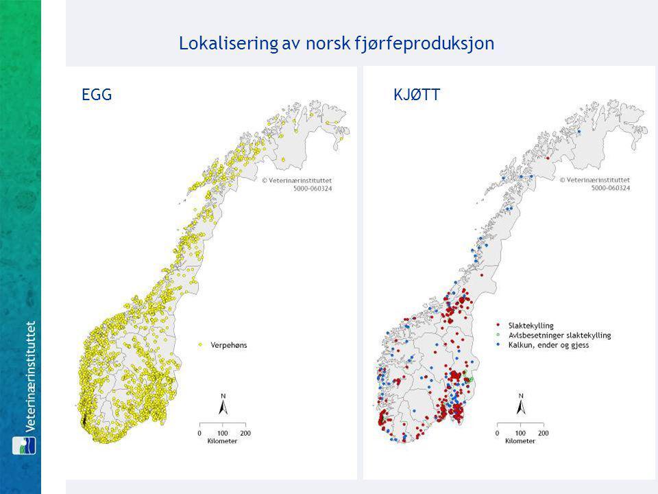 Lokalisering av norsk fjørfeproduksjon