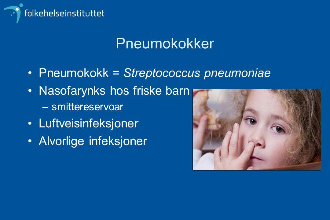 Pneumokokker Pneumokokk = Streptococcus pneumoniae