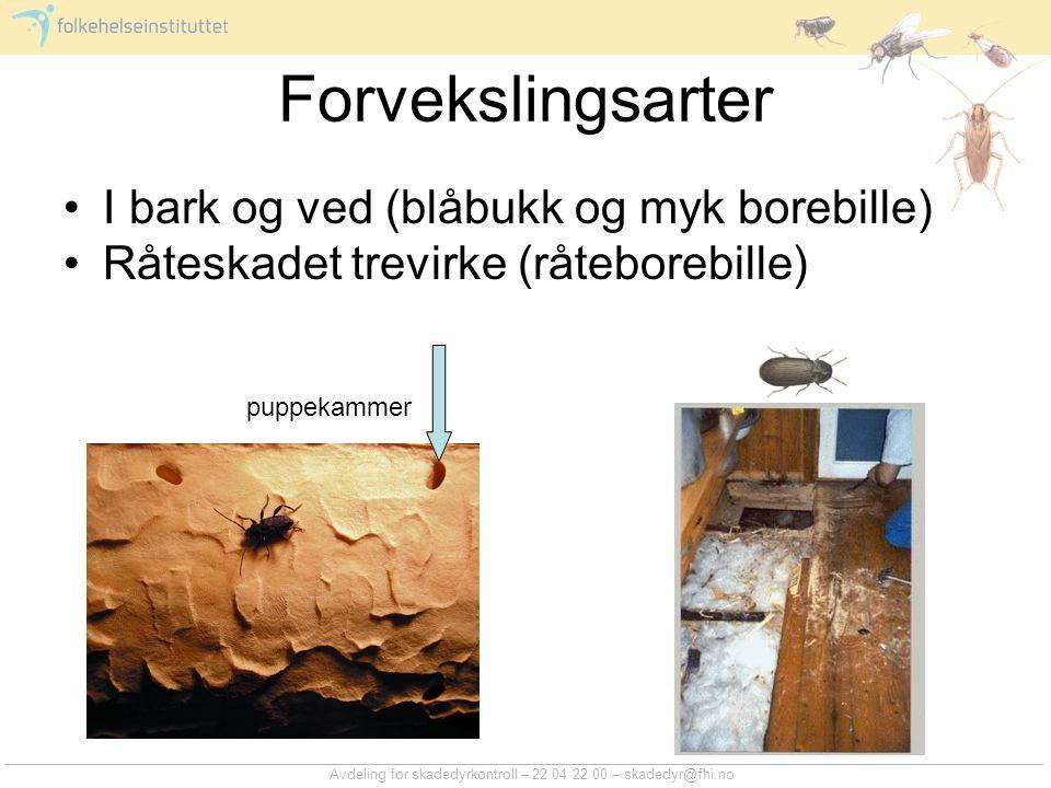 Forvekslingsarter I bark og ved (blåbukk og myk borebille)