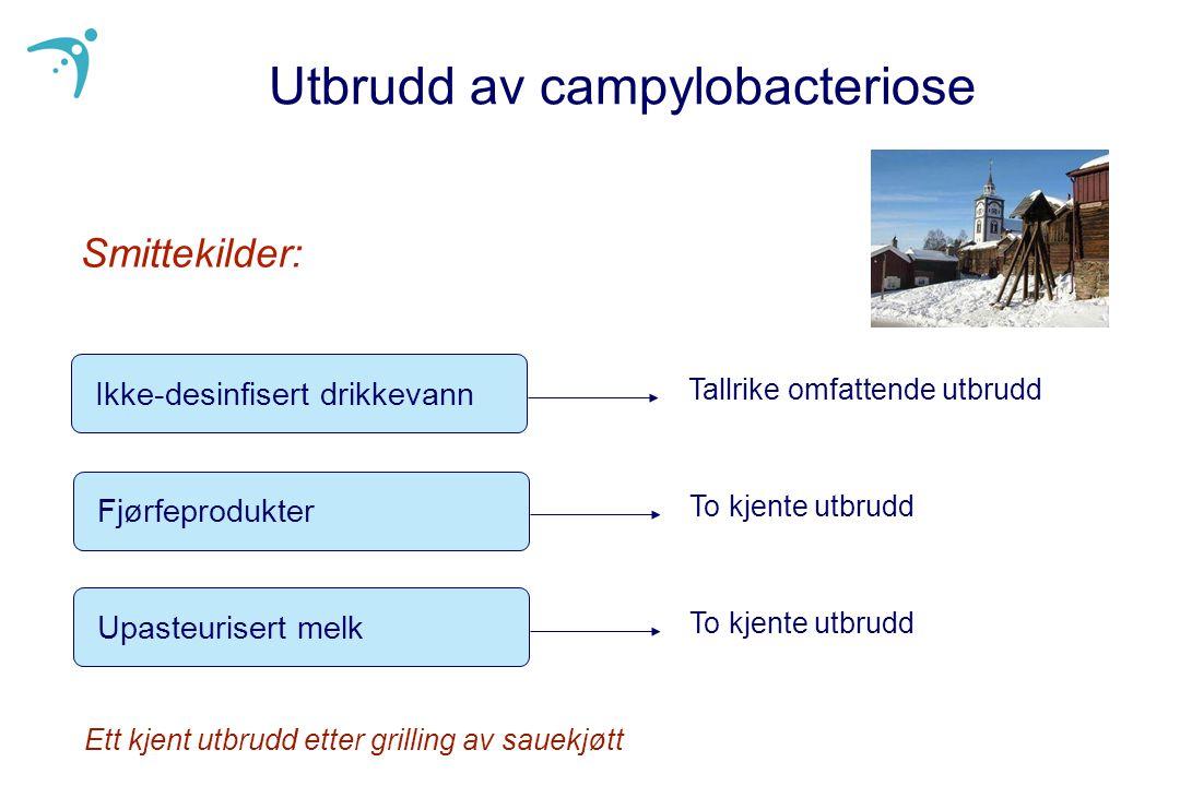 Utbrudd av campylobacteriose