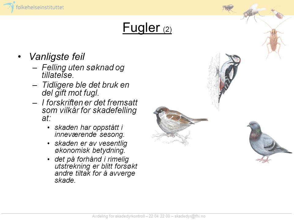 Fugler (2) Vanligste feil Felling uten søknad og tillatelse.