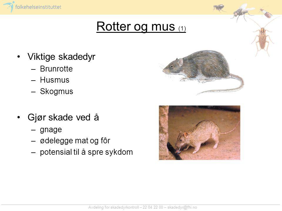 Rotter og mus (1) Viktige skadedyr Gjør skade ved å Brunrotte Husmus