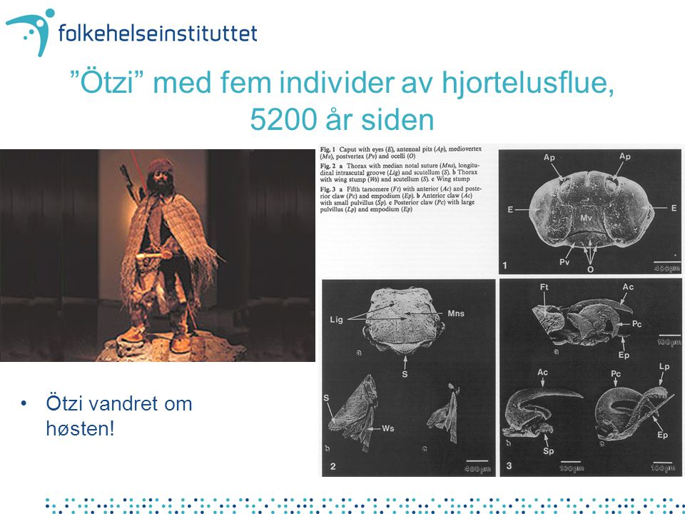 Ötzi med fem individer av hjortelusflue, 5200 år siden