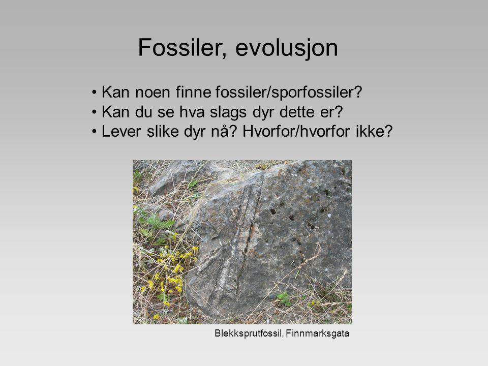 Fossiler, evolusjon Kan noen finne fossiler/sporfossiler