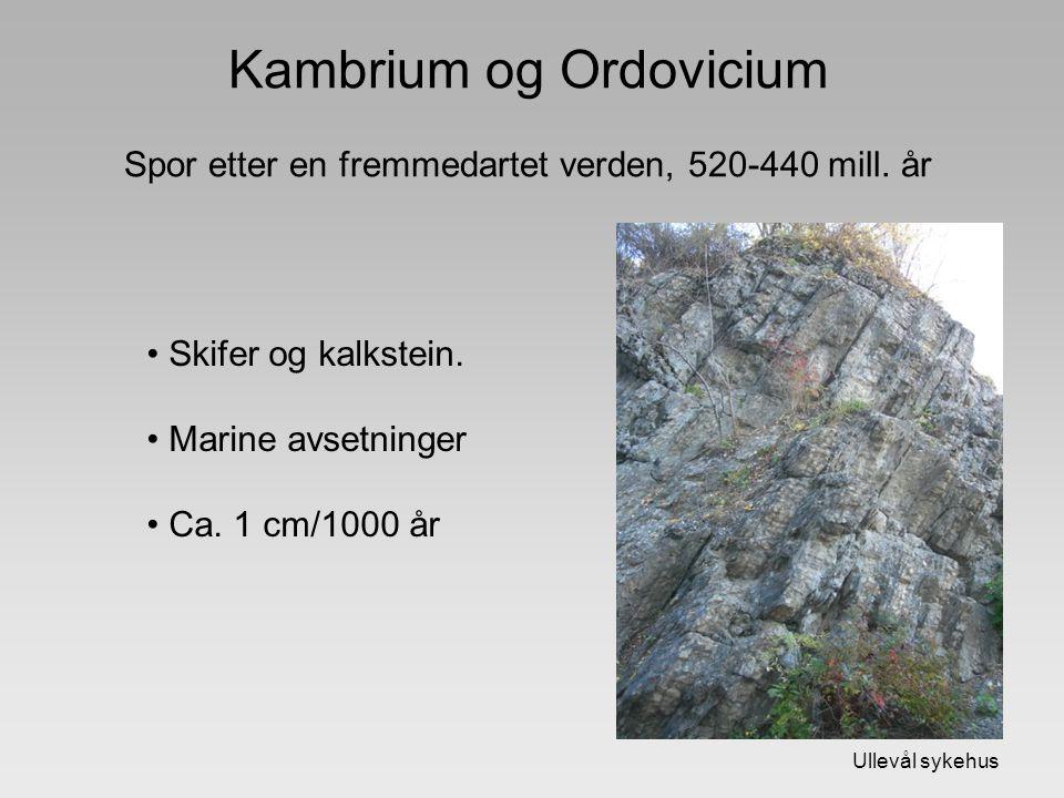 Kambrium og Ordovicium