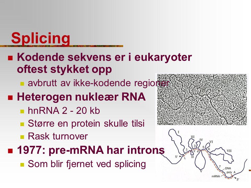 Splicing Kodende sekvens er i eukaryoter oftest stykket opp