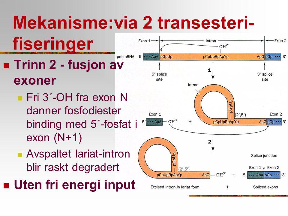 Mekanisme:via 2 transesteri-fiseringer