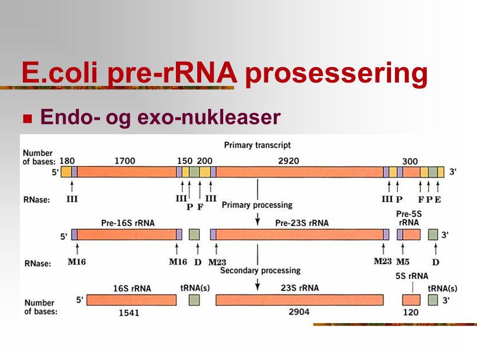E.coli pre-rRNA prosessering