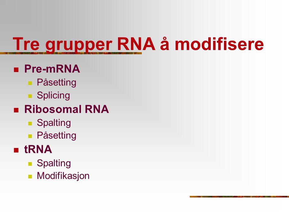 Tre grupper RNA å modifisere