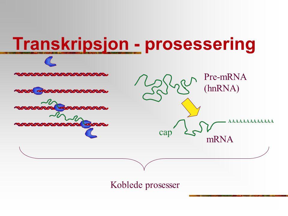Transkripsjon - prosessering