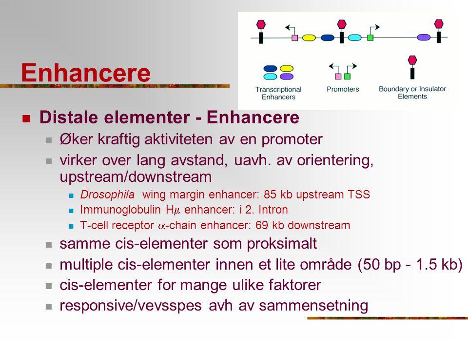 Enhancere Distale elementer - Enhancere