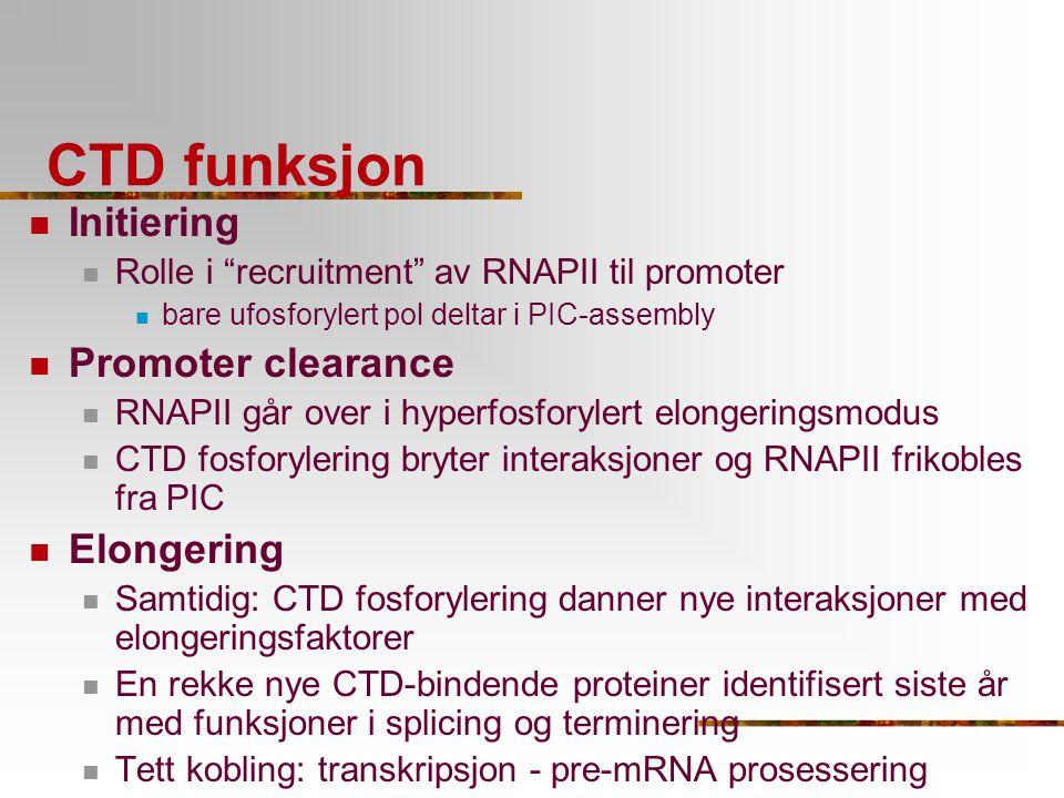CTD funksjon Initiering Promoter clearance Elongering