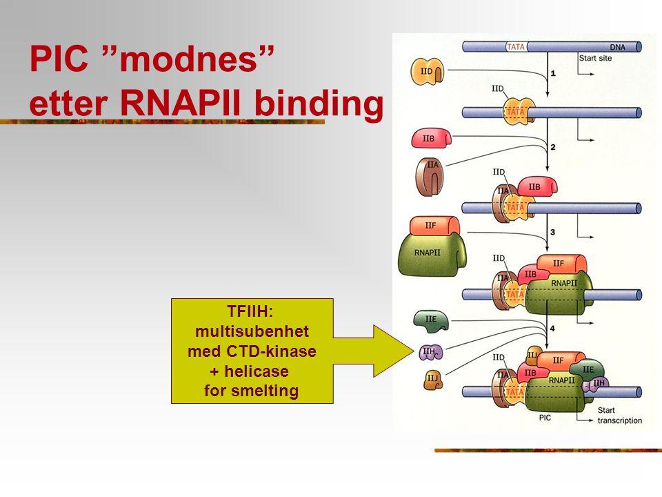 PIC modnes etter RNAPII binding