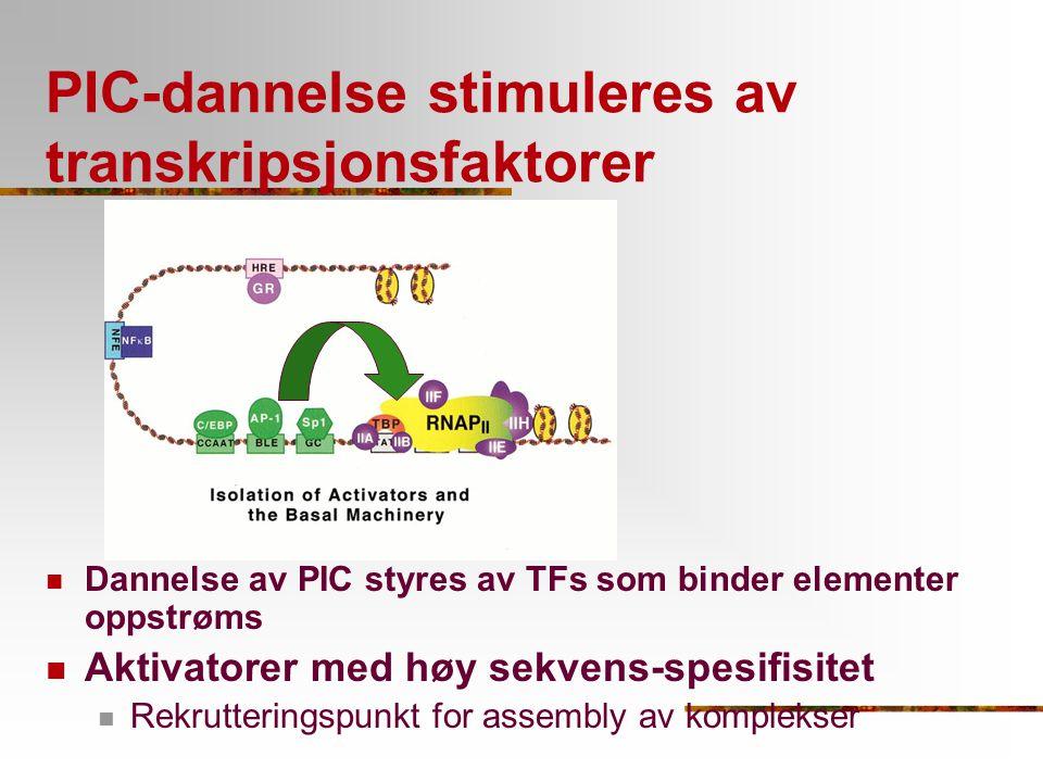 PIC-dannelse stimuleres av transkripsjonsfaktorer