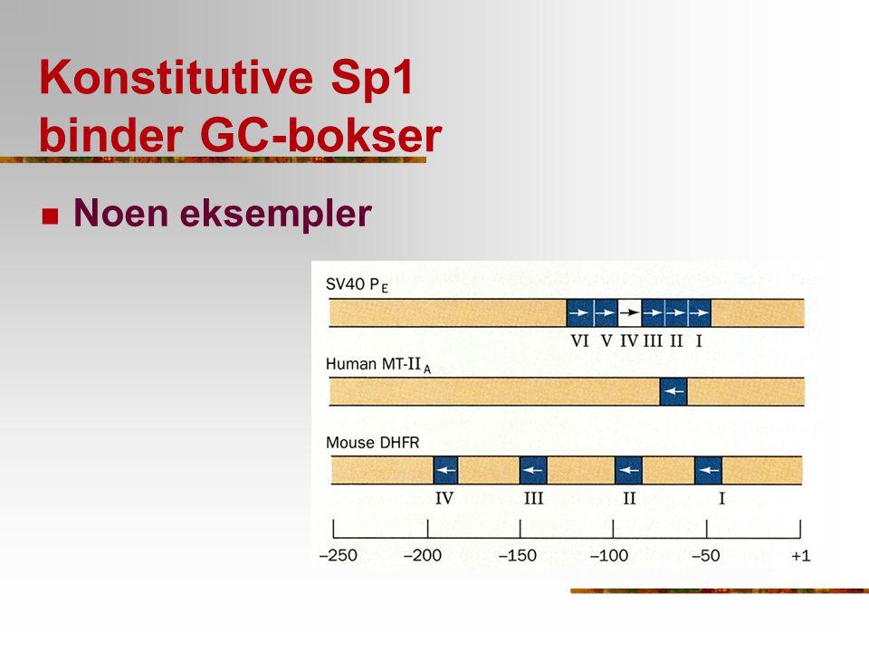 Konstitutive Sp1 binder GC-bokser