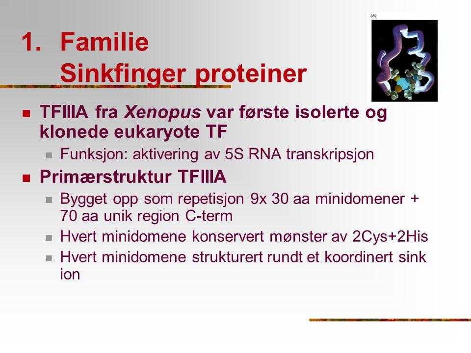Familie Sinkfinger proteiner