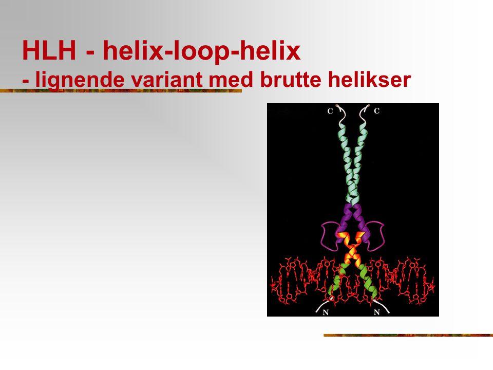 HLH - helix-loop-helix - lignende variant med brutte helikser