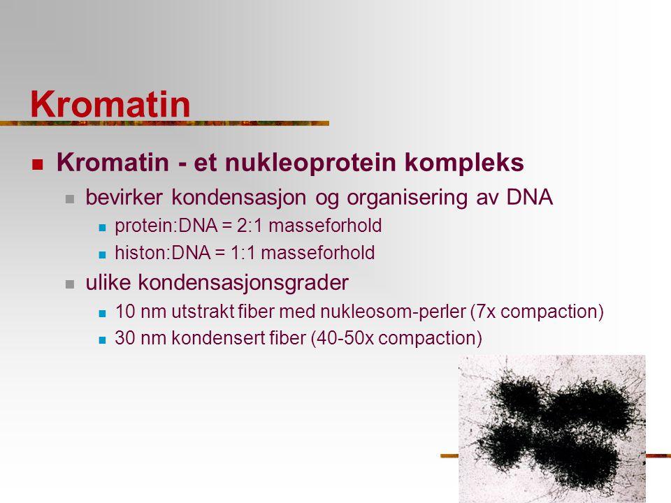 Kromatin Kromatin - et nukleoprotein kompleks