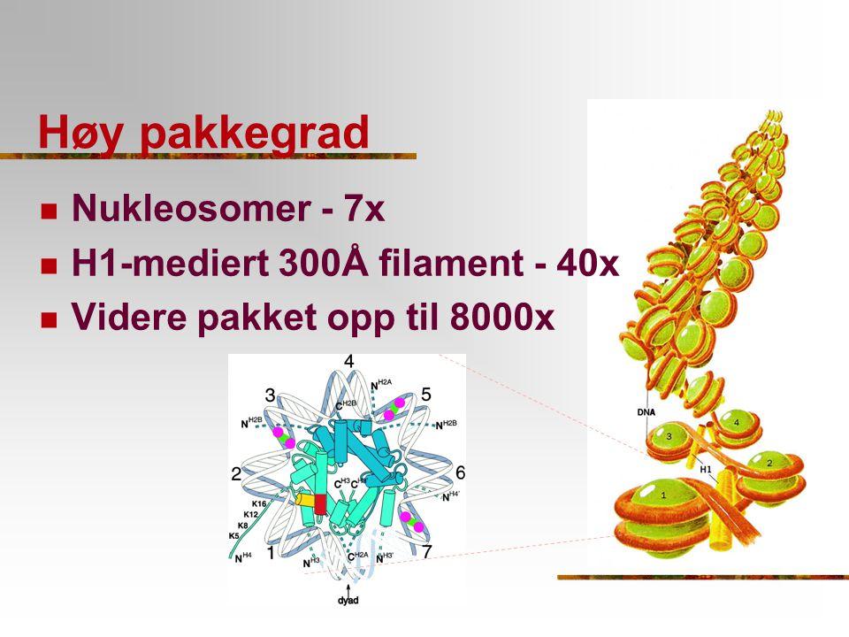 Høy pakkegrad Nukleosomer - 7x H1-mediert 300Å filament - 40x