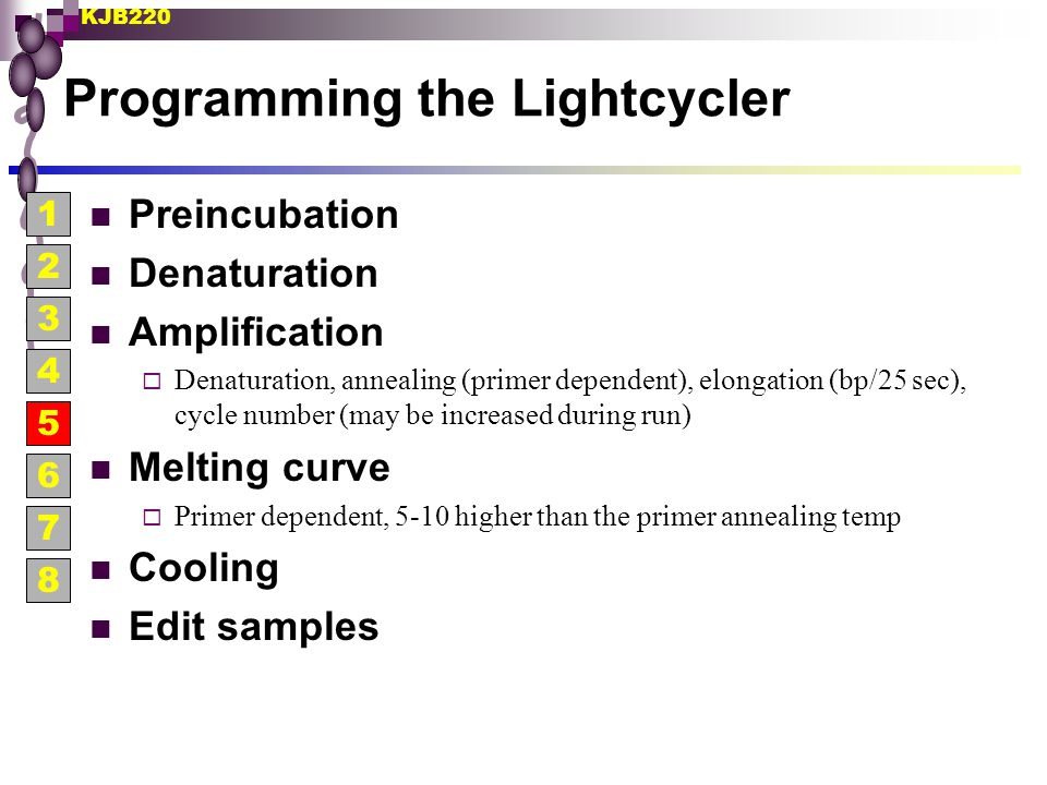 Programming the Lightcycler