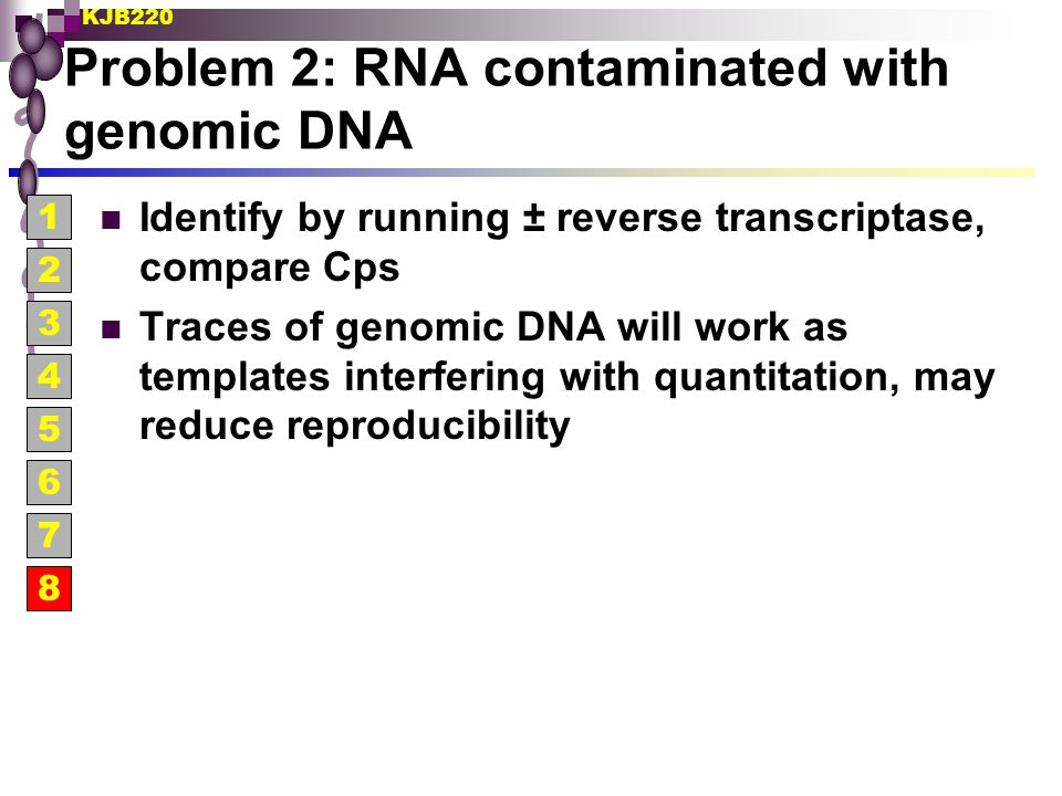 Problem 2: RNA contaminated with genomic DNA