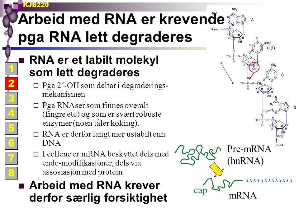 Arbeid med RNA er krevende pga RNA lett degraderes