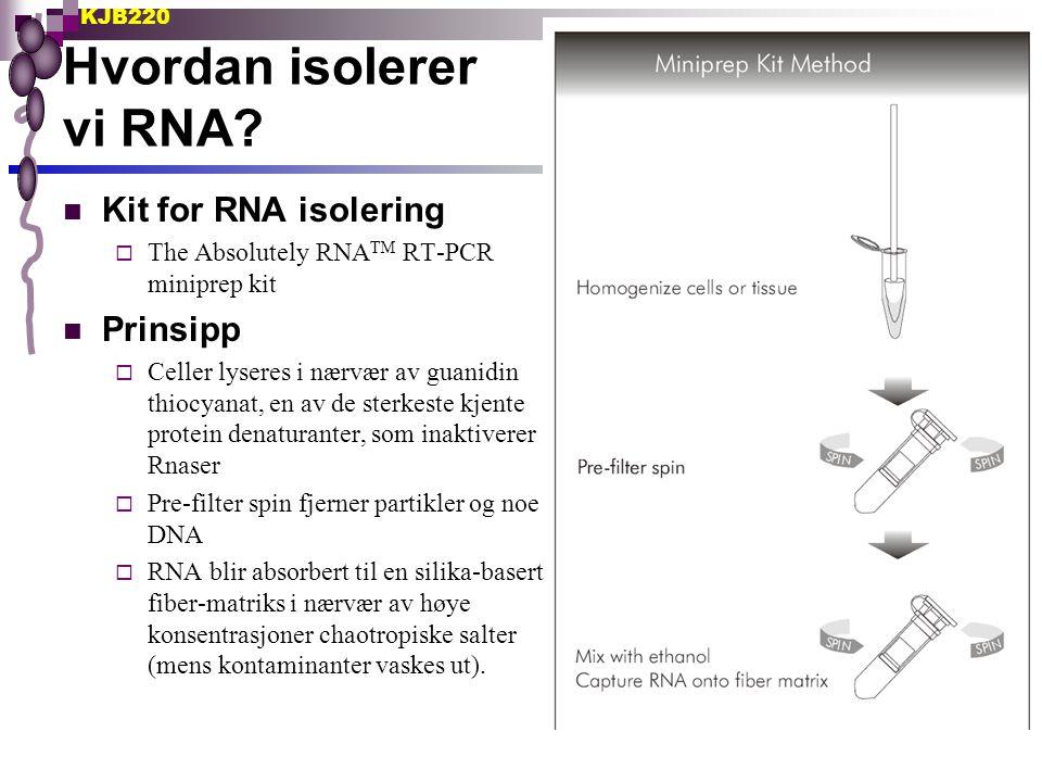 Hvordan isolerer vi RNA