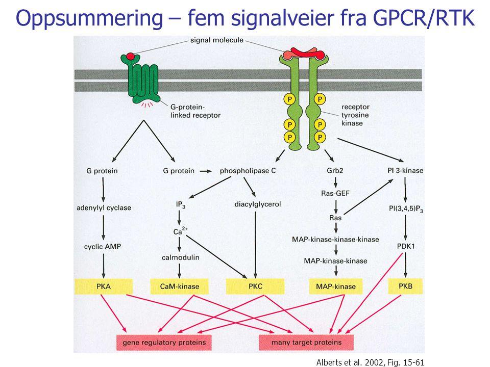 Oppsummering – fem signalveier fra GPCR/RTK