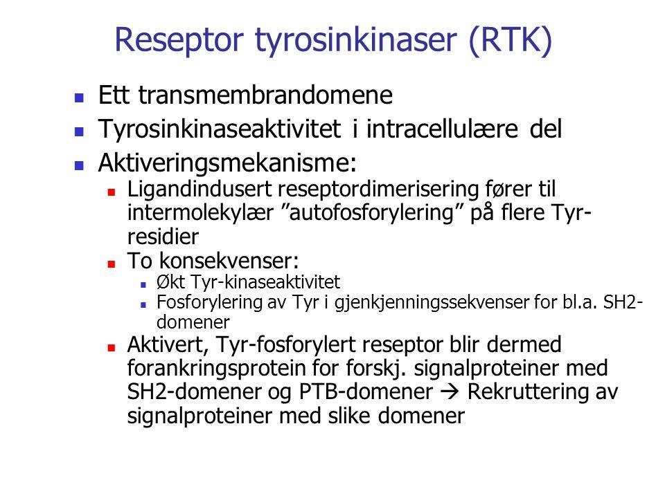 Reseptor tyrosinkinaser (RTK)
